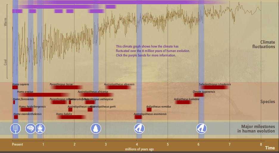 Human timeline.PNG