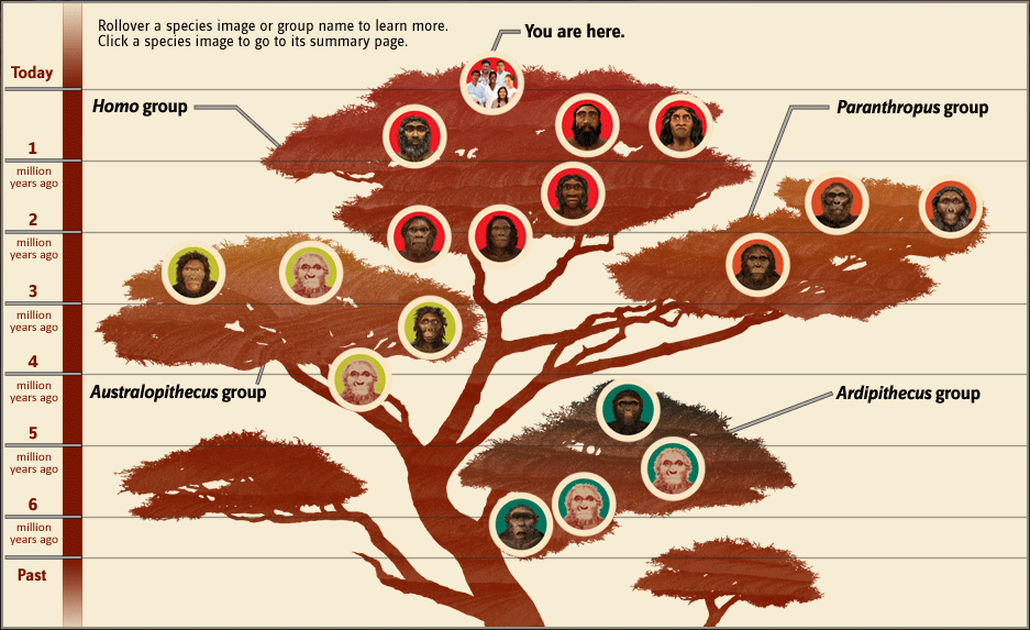 Smithsonian Human Family Tree.png